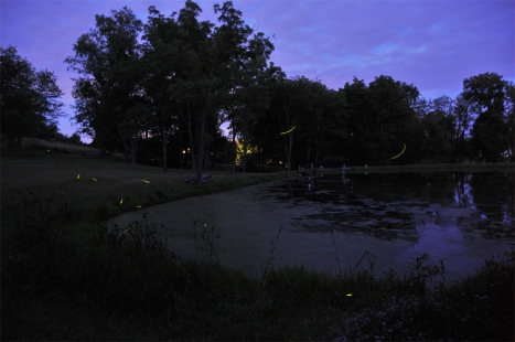 Fireflies of Summer