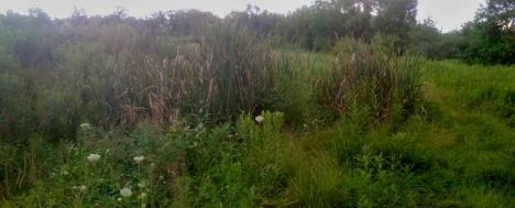 My personal greywater wetland