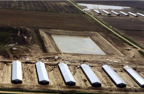 Manure lagoons near factory farms